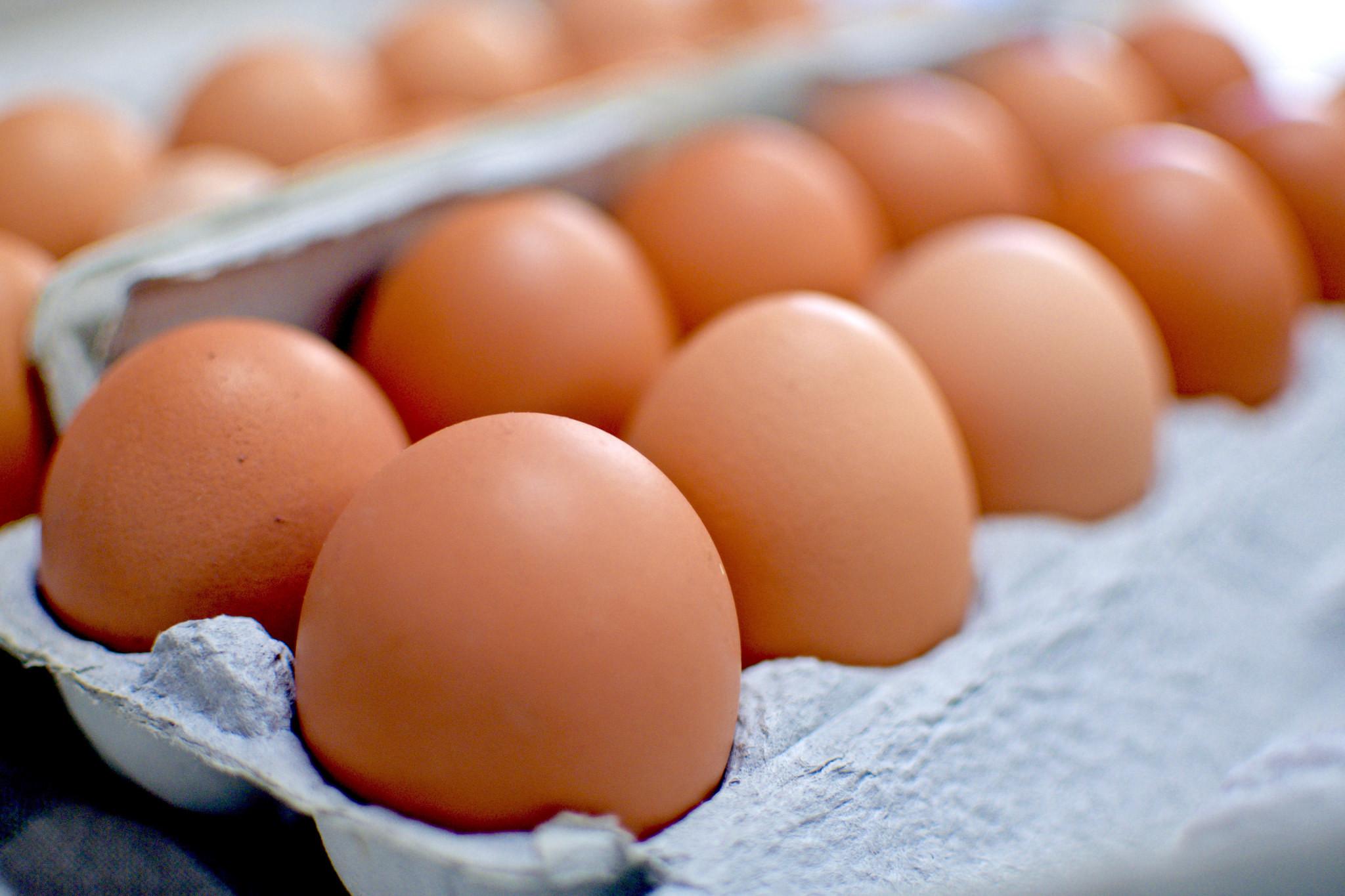 eggs-2.jpg#asset:4504