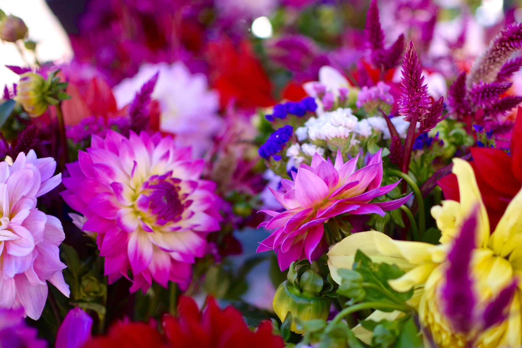flowers_outdoor-3.jpg#asset:2335