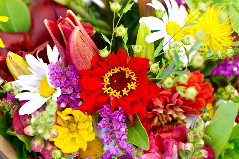 flowers_outdoor-5_200724_182142.jpg#asset:4589