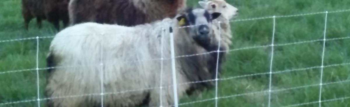 Sylvan Meadows Farm - Salvation Soaps