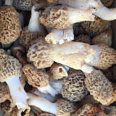 Recipe of the Week - Morels on Toast