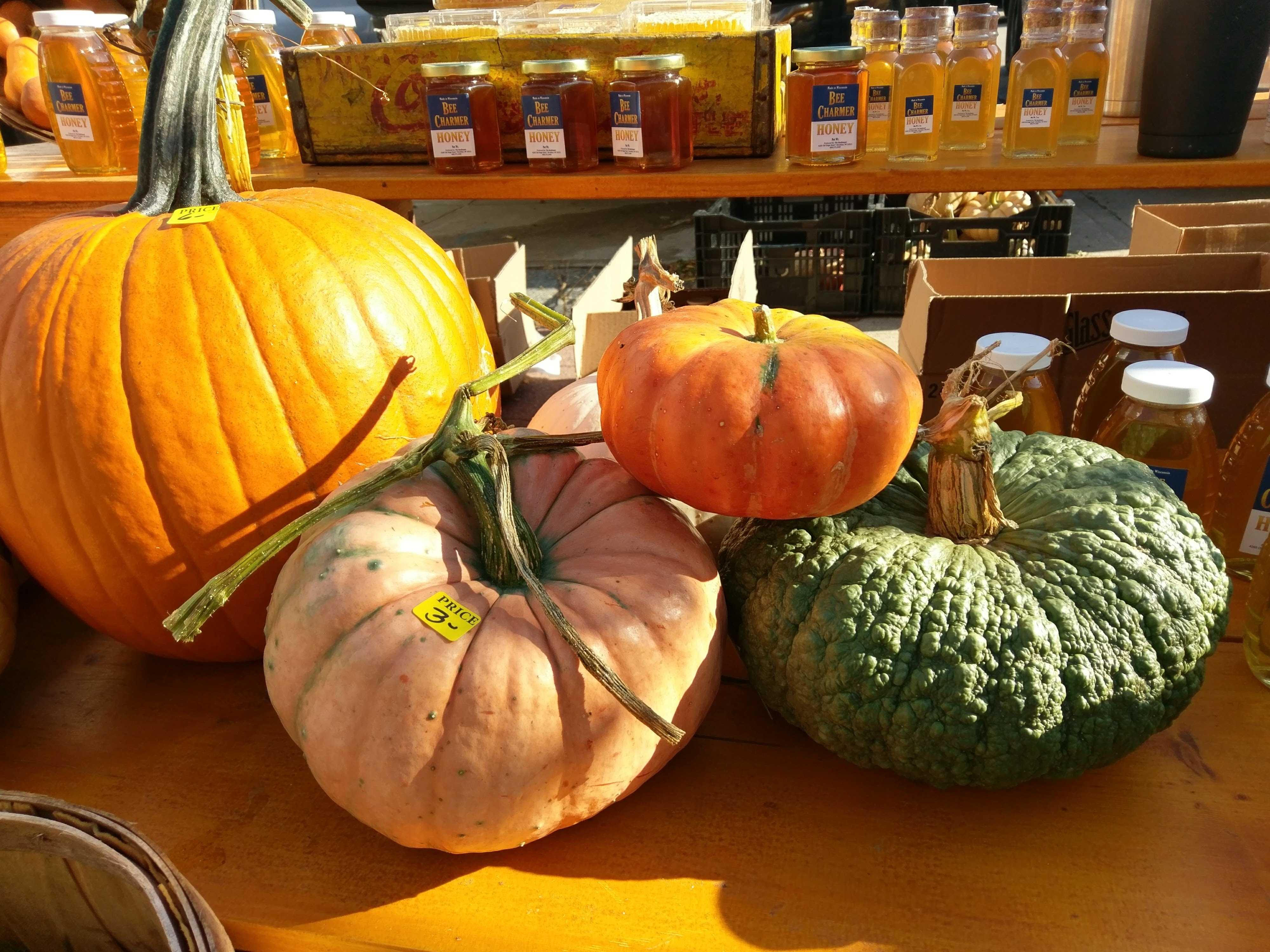 pumpkin_outdoor-11.jpg#asset:2562