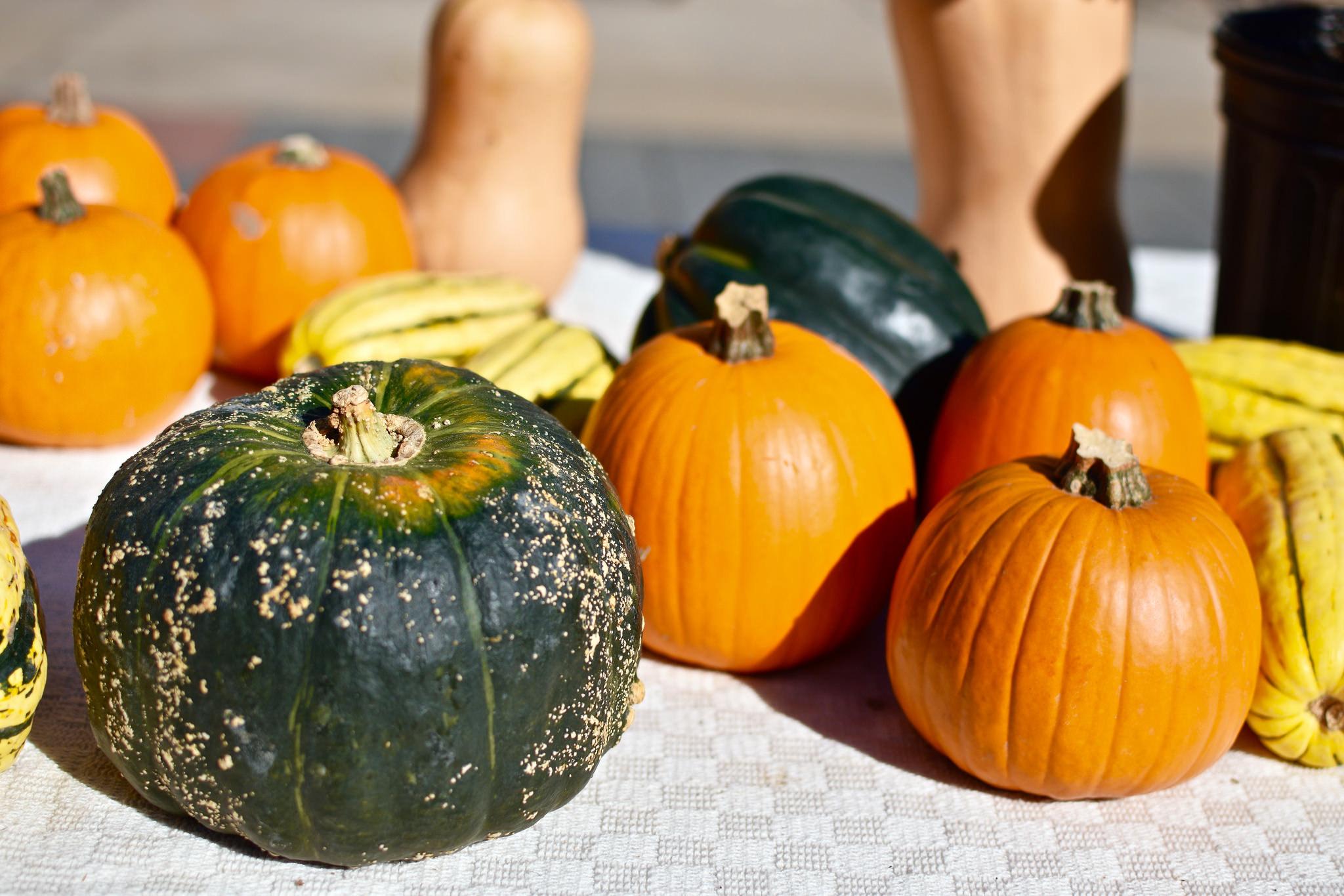 pumpkin_squash_outdoor-2.jpg#asset:3356