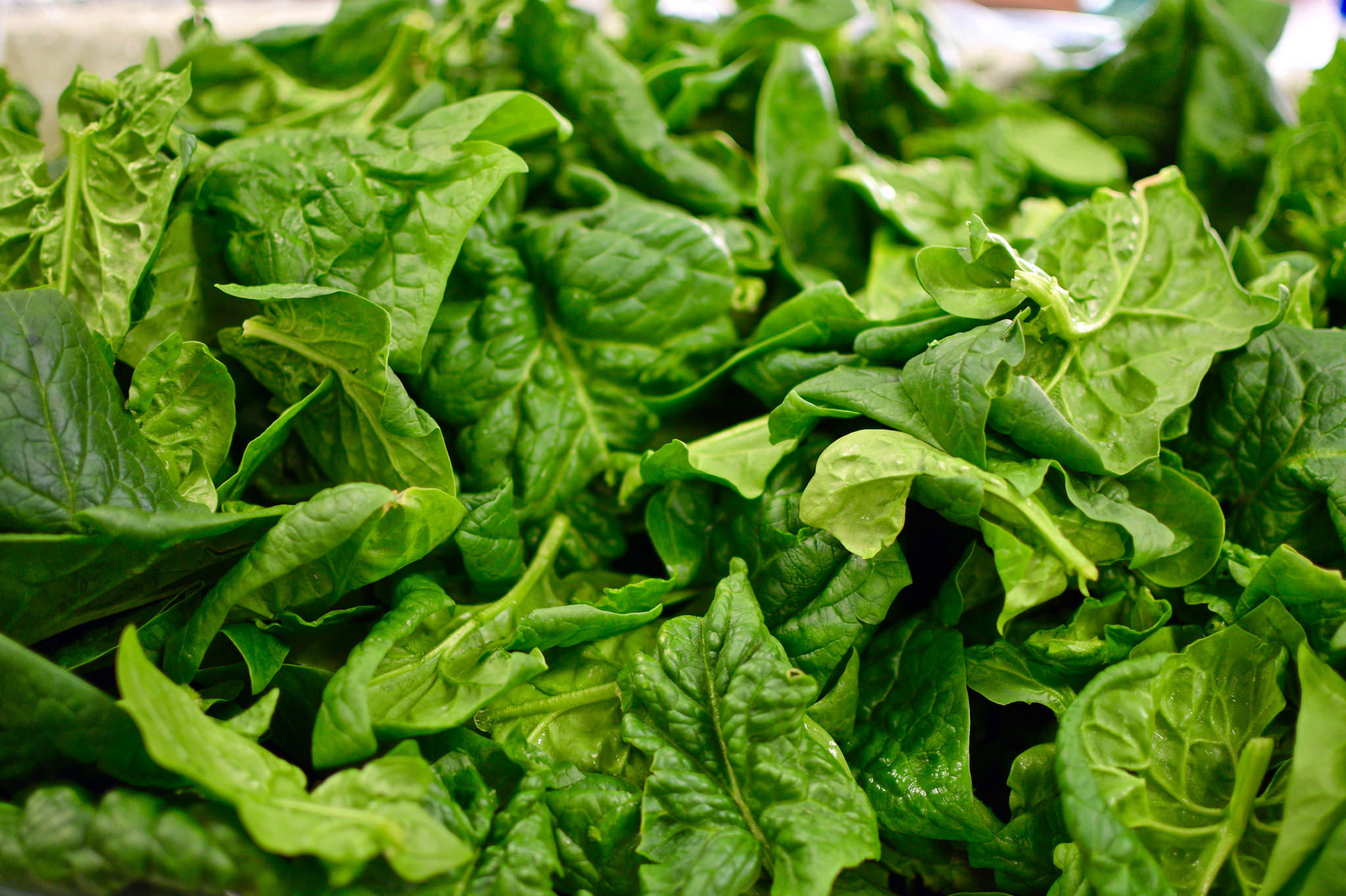 Frost-sweetened spinach