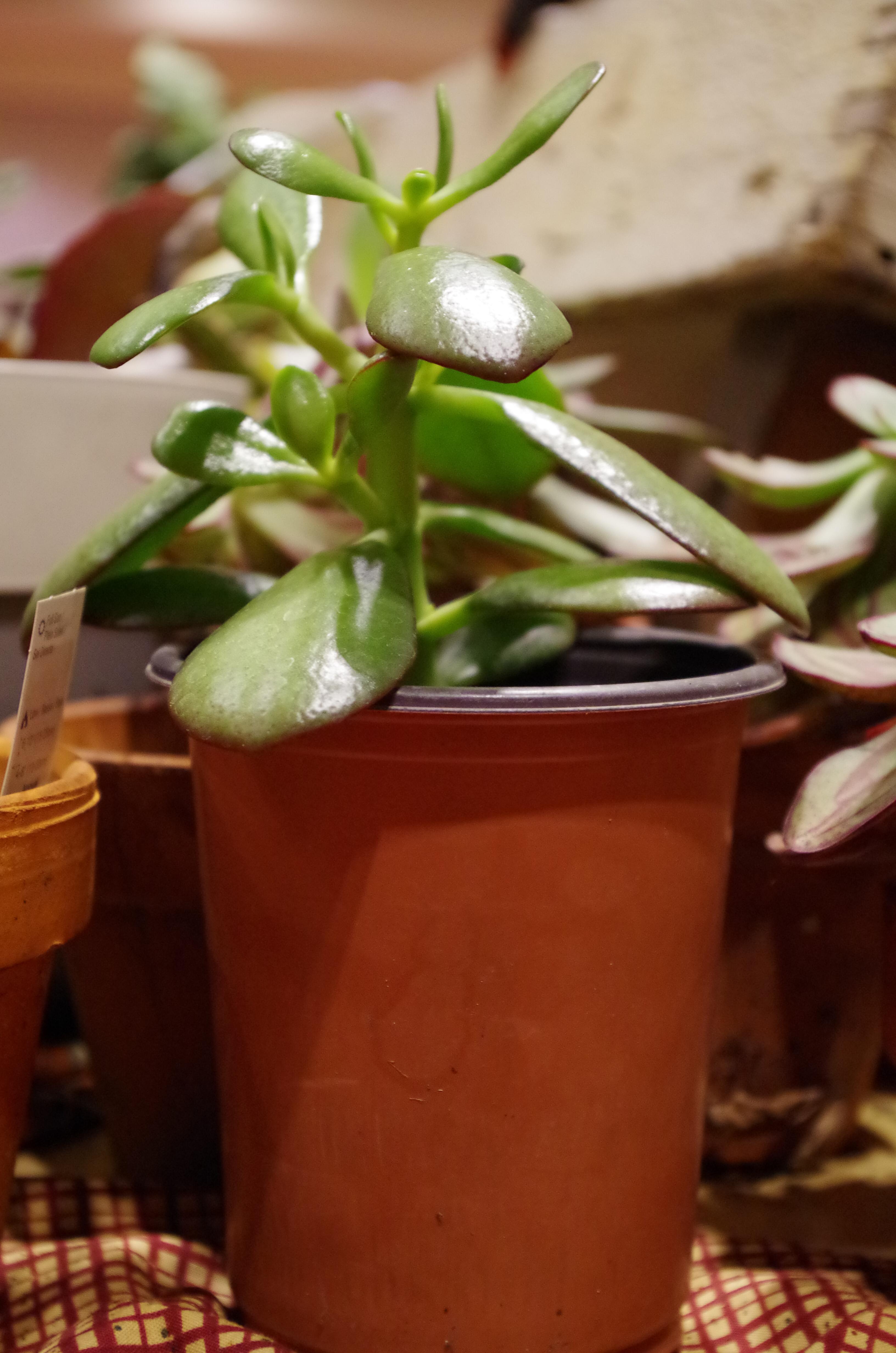 succulent_houseplant_indoor-3.jpg#asset:2675