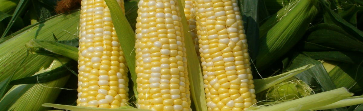 Alsum Sweet Corn