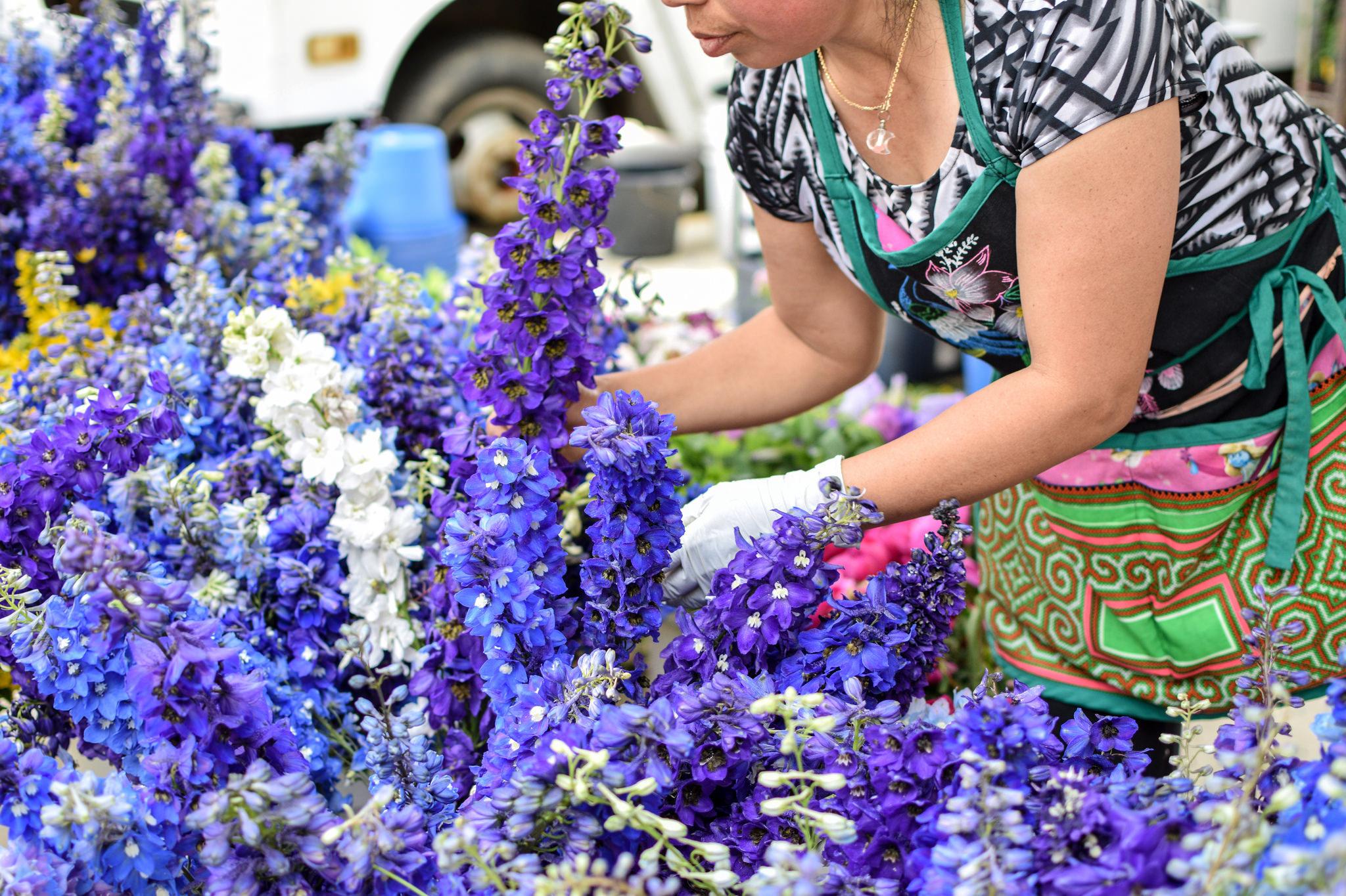 flower_plant_lee_outdoor.jpg#asset:2191