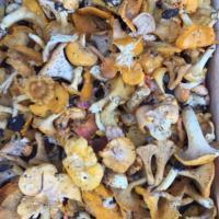 Mushrooms, wild