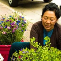 Mai's Flowers