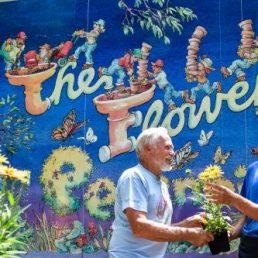 The Flower Factory Nursery Inc.
